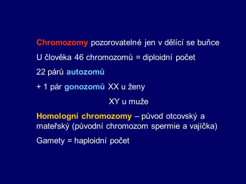 Chromozomy pozorovatelné jen v dělící se buňce U člověka 46 chromozomů = diploidní počet 22 párů autozomů + 1 pár gonozomů XX u ženy XY u muže Homolog