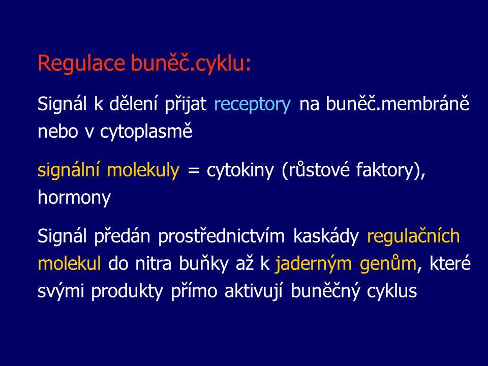 Regulace buněč.cyklu: Signál k dělení přijat receptory na buněč.membráně nebo v cytoplasmě signální molekuly = cytokiny (růstové faktory), hormony Sig