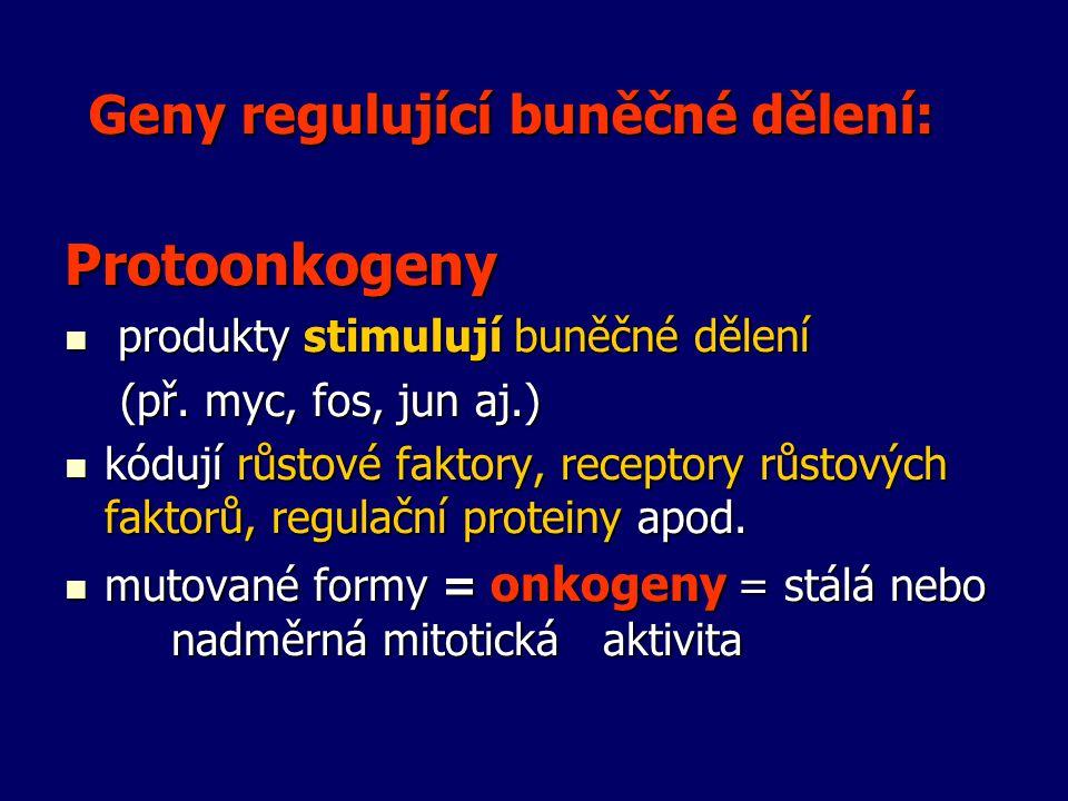 Geny regulující buněčné dělení: Protoonkogeny produkty stimulují buněčné dělení produkty stimulují buněčné dělení (př. myc, fos, jun aj.) (př. myc, fo