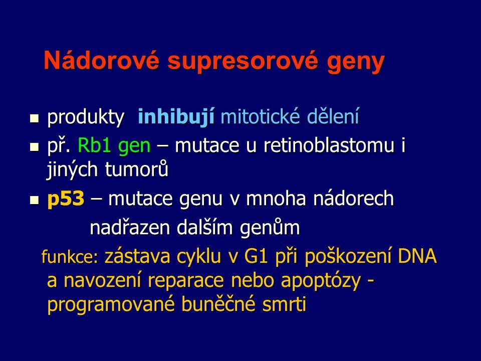 Nádorové supresorové geny Nádorové supresorové geny produkty inhibují mitotické dělení produkty inhibují mitotické dělení př. Rb1 gen – mutace u retin
