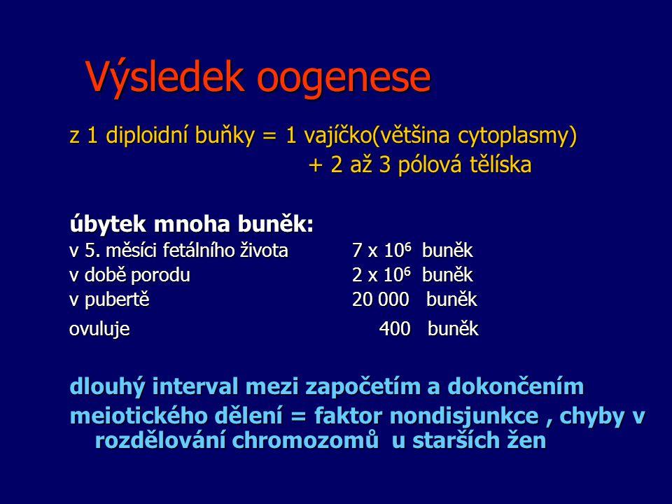 Výsledek oogenese z 1 diploidní buňky = 1 vajíčko(většina cytoplasmy) + 2 až 3 pólová tělíska + 2 až 3 pólová tělíska úbytek mnoha buněk: v 5. měsíci
