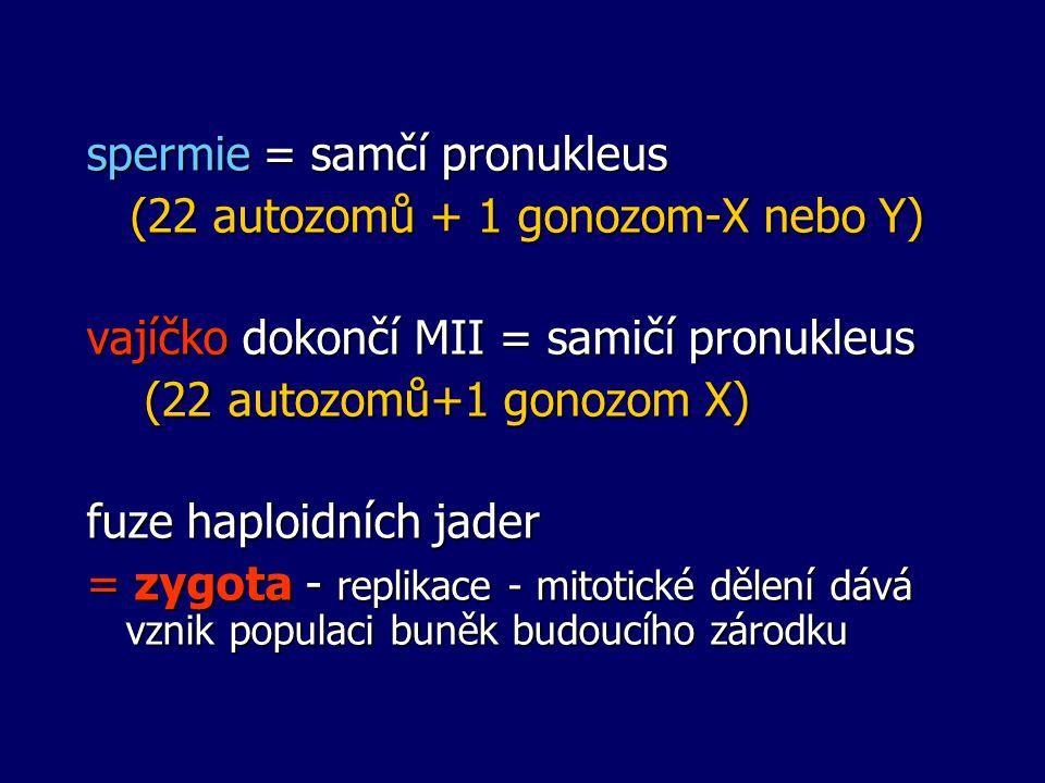 spermie = samčí pronukleus (22 autozomů + 1 gonozom-X nebo Y) (22 autozomů + 1 gonozom-X nebo Y) vajíčko dokončí MII = samičí pronukleus (22 autozomů+