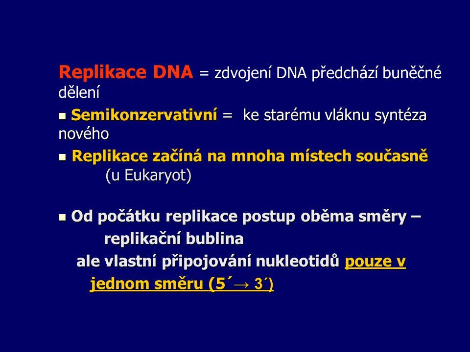 Replikace DNA = zdvojení DNA předchází buněčné dělení Semikonzervativní = ke starému vláknu syntéza nového Semikonzervativní = ke starému vláknu synté