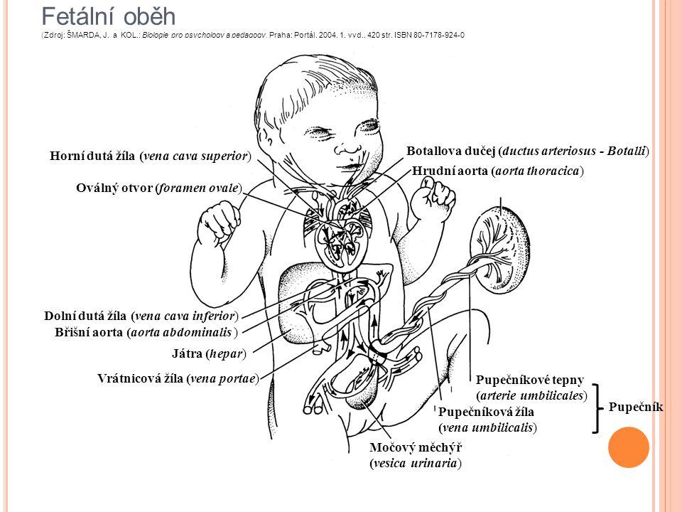 Porod Hormon oxytocin (hypotalomo – hypofyzární systém, neuro/adenohypofýza) Doby: 1) otevírací 2) vypuzovací 3) lůžková Smršťování dělohy – kojení Rizika: hypoxie, porodní trauma, infekce Porodní plán: kdo u porodu, klystýr, holení, anestezie, způsob porodu (voda, dřep,..) Zaj.:http://www.orgasmicbirth.com/ http://www.youtube.com/watch?v=libHZJ4TRxohttp://www.orgasmicbirth.com/ http://www.youtube.com/watch?v=libHZJ4TRxo Roman Musílek: Bc práce, Riziko porodu v porodnici a v domácím prostředí.