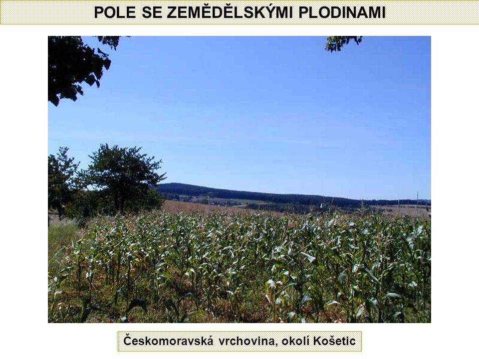 POLE SE ZEMĚDĚLSKÝMI PLODINAMI Českomoravská vrchovina, okolí Košetic