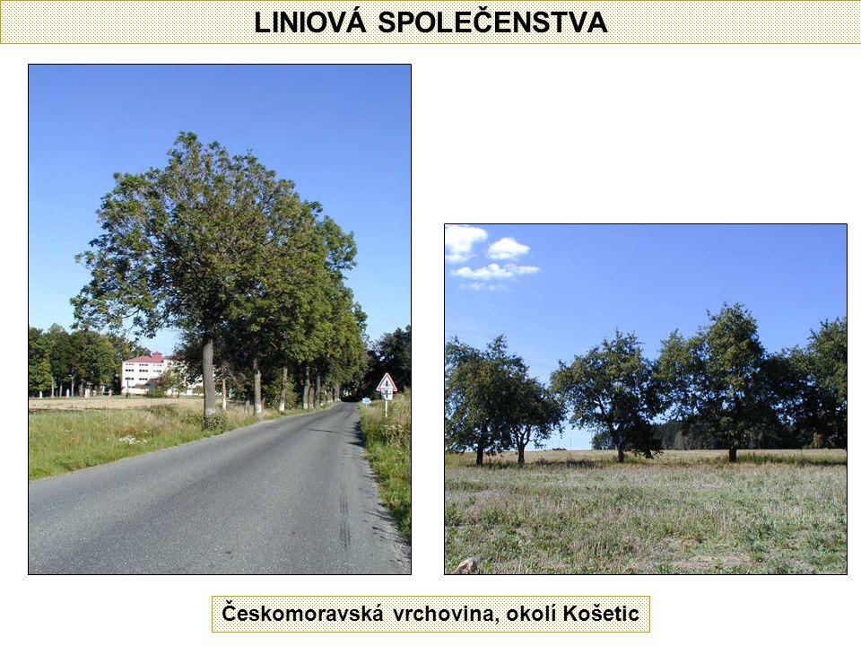 LINIOVÁ SPOLEČENSTVA Českomoravská vrchovina, okolí Košetic