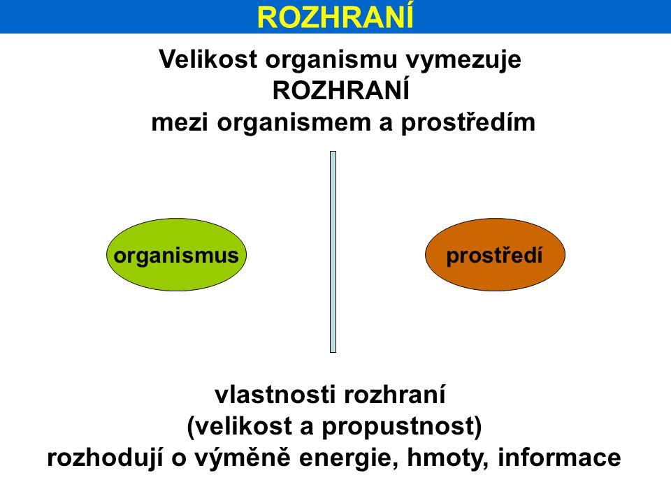 ROZHRANÍ Velikost organismu vymezuje ROZHRANÍ mezi organismem a prostředím organismusprostředí vlastnosti rozhraní (velikost a propustnost) rozhodují o výměně energie, hmoty, informace
