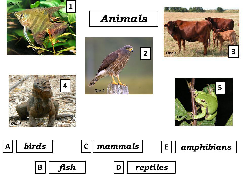 5 Animals mammals amphibians reptiles birds fish A B C D E 1 2 3 4 Obr.1 Obr.2 Obr.3 Obr.4 Obr.5
