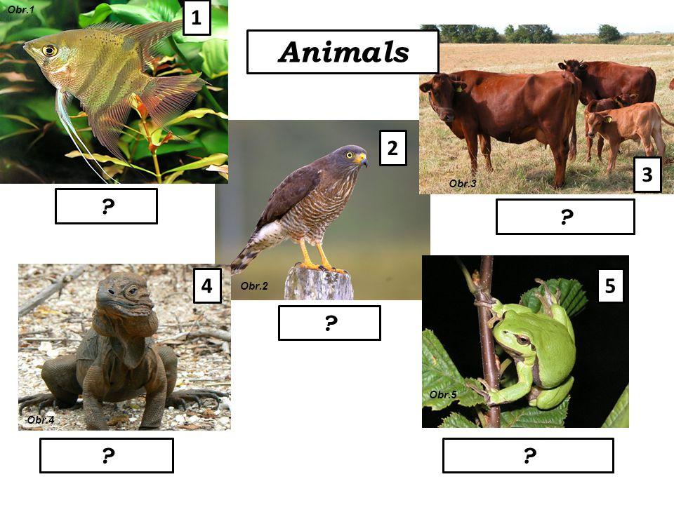 5 Animals mammals amphibiansreptiles birds fish 1 2 3 4 Obr.1 Obr.2 Obr.3 Obr.4 Obr.5 ? ? ? ??