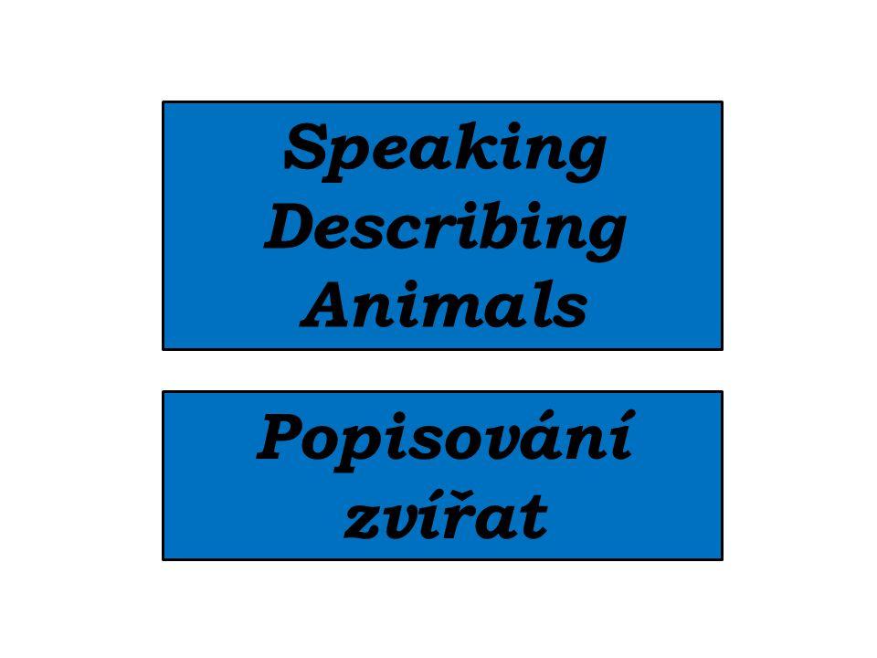 Speaking Describing Animals Popisování zvířat