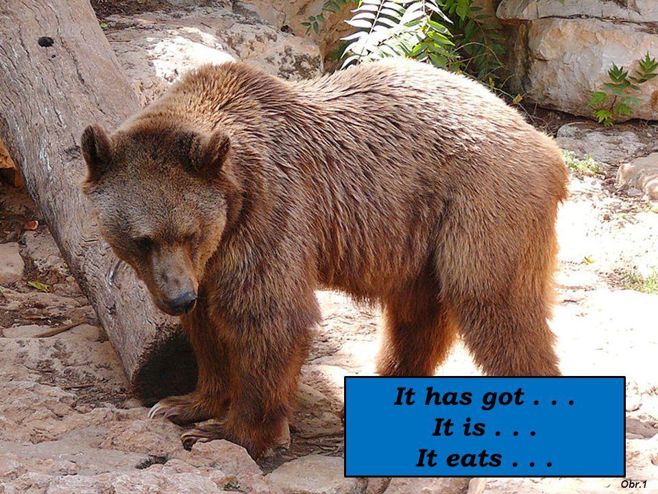It has got... It is... It eats... Obr.1