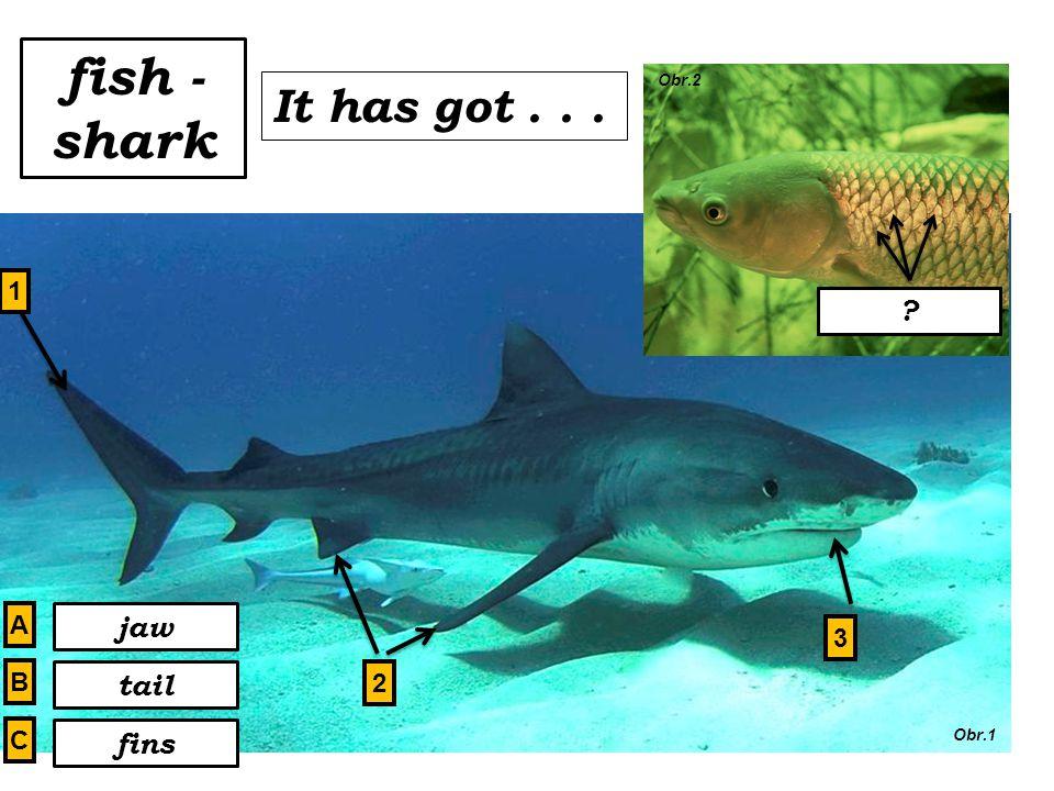 fish - shark tail fins jaw scales It has got... 1 2 3 A B C Obr.1 Obr.2 scales?