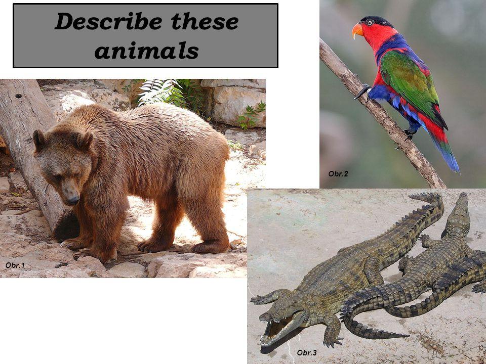 Describe these animals Obr.1 Obr.2 Obr.3