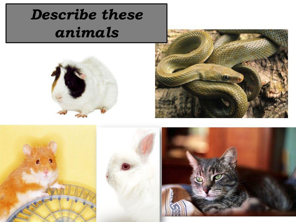 Describe these animals