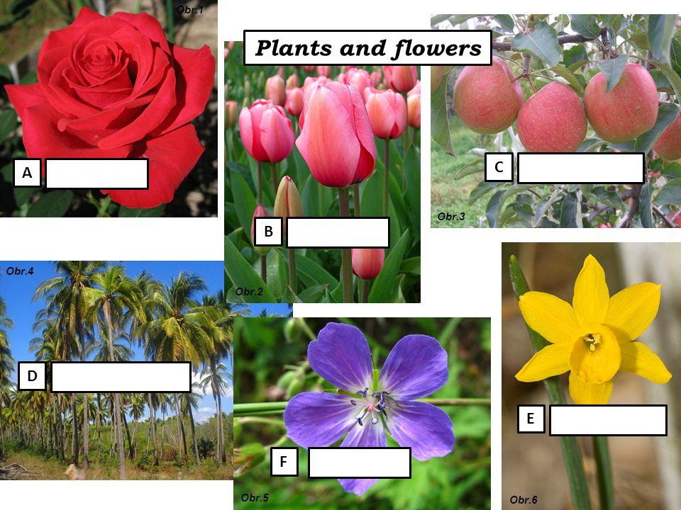 Plants and flowers palm tree rose tulip violet daffodil apple tree A B C E F D Obr.1 Obr.2 Obr.3 Obr.4 Obr.5 Obr.6