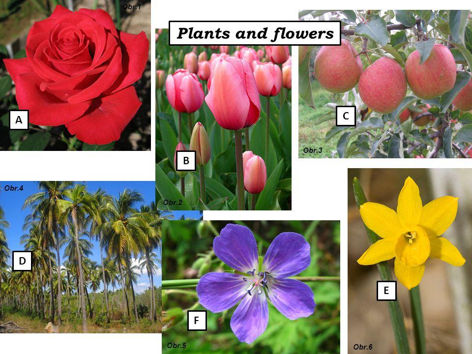 Plants and flowers A B C E F D Obr.1 Obr.2 Obr.3 Obr.4 Obr.5 Obr.6