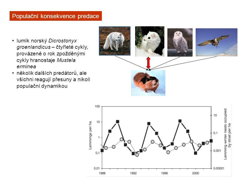 Populační konsekvence predace lumík norský Dicrostonyx groenlandicus – čtyřleté cykly, provázené o rok zpožděnými cykly hranostaje Mustela erminea něk