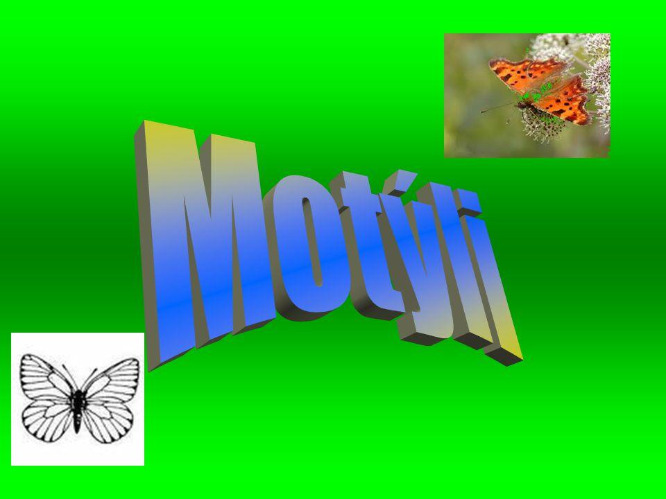 Motýli Motýli tvoří druhý největší řádřád řád řádhmyzu, hned po broucíchbroucích.