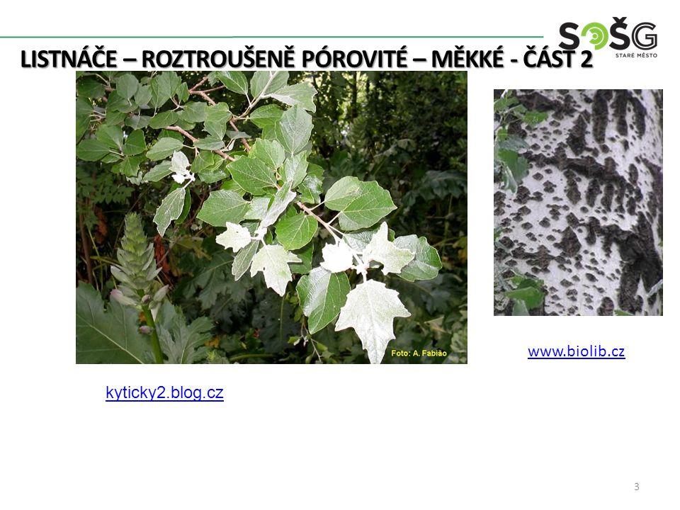 LISTNÁČE – ROZTROUŠENĚ PÓROVITÉ – MĚKKÉ - ČÁST 2 Topol Černý – Populus Nigra – TP 20-30m Listy dlouhostopkaté, trojúhelníkové, širší než delší, okraj vroubkovaně pilkovitý Světle popelavě šedá kůra, mění se na šedočernou rozpraskanou Na kmenu často rostou od spodu výmladky 4