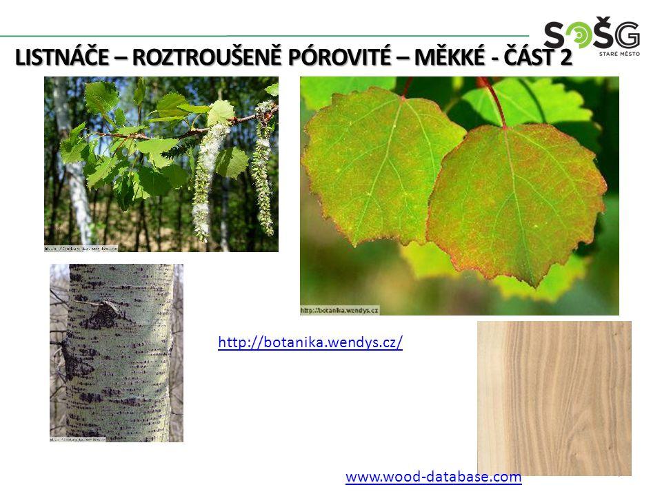 LISTNÁČE – ROZTROUŠENĚ PÓROVITÉ – MĚKKÉ - ČÁST 2 7 http://botanika.wendys.cz/ www.wood-database.com