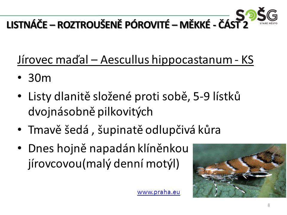 LISTNÁČE – ROZTROUŠENĚ PÓROVITÉ – MĚKKÉ –ČÁST2 dendro.mojzisek.c z www.reiki-oasa.cz http://botany.cz/
