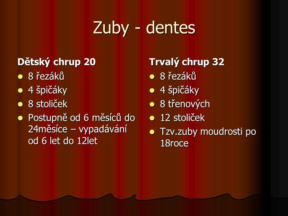 Zuby - dentes Dětský chrup 20 8 řezáků 8 řezáků 4 špičáky 4 špičáky 8 stoliček 8 stoliček Postupně od 6 měsíců do 24měsíce – vypadávání od 6 let do 12