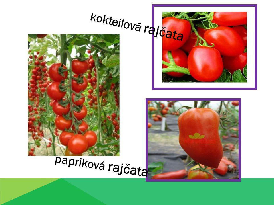 Kontrolní otázky 1.Jaké je využití rajčete ve výživě člověka.