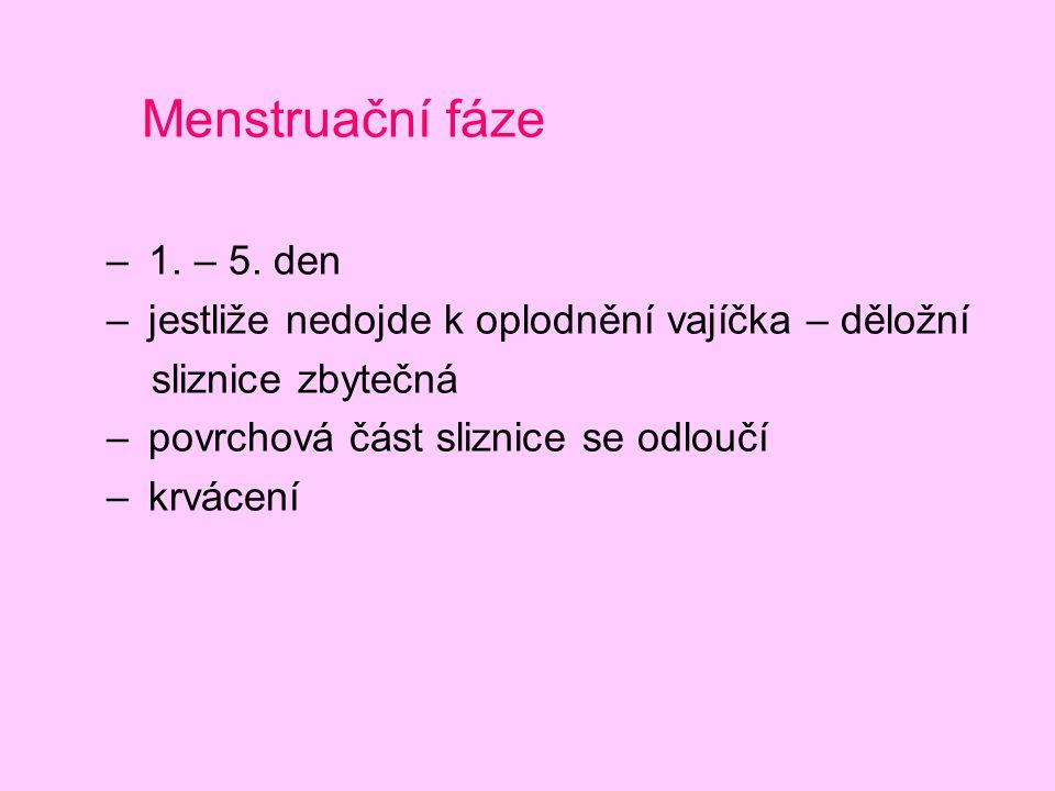 Menstruační fáze – 1. – 5. den – jestliže nedojde k oplodnění vajíčka – děložní sliznice zbytečná – povrchová část sliznice se odloučí – krvácení
