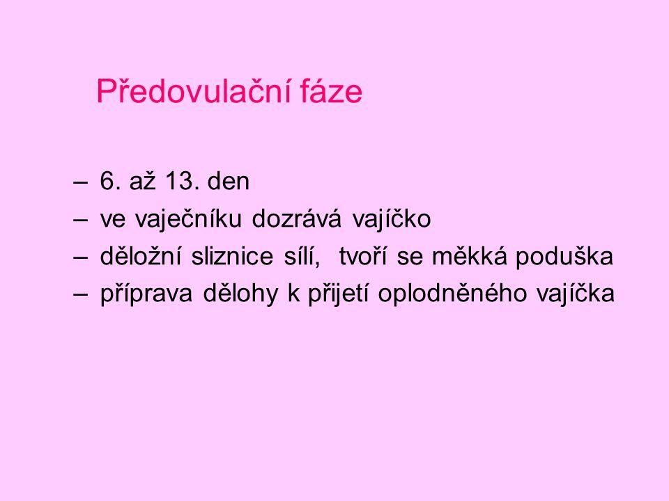 Předovulační fáze – 6. až 13. den – ve vaječníku dozrává vajíčko – děložní sliznice sílí, tvoří se měkká poduška – příprava dělohy k přijetí oplodněné
