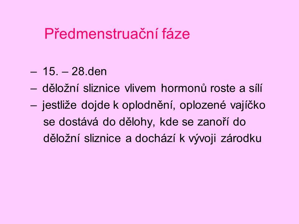 Předmenstruační fáze – 15. – 28.den – děložní sliznice vlivem hormonů roste a sílí – jestliže dojde k oplodnění, oplozené vajíčko se dostává do dělohy