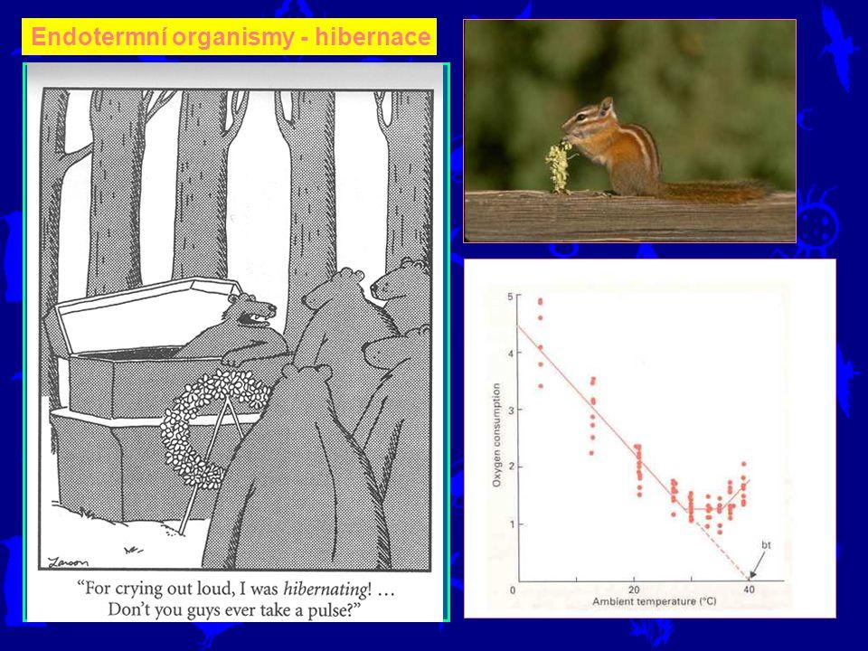 Mnoho endotermních živočichů (savců) přečkává zimu ve strnulosti, ba přímo hibernaci. Menší savci to mají těžší, protože metabolická rychlost [W] jedi