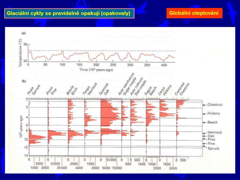 Glaciální cykly se pravidelně opakují (opakovaly) Globální oteplování
