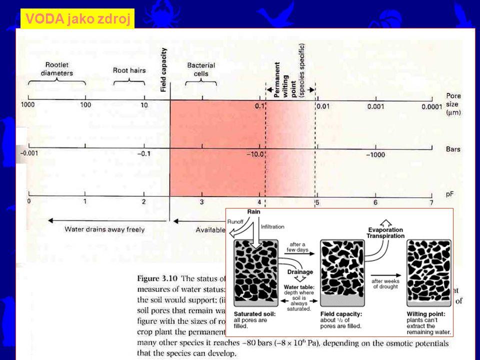 Přítomnost vody v buňkách je podmínkou jakékoliv metabolické aktivity.