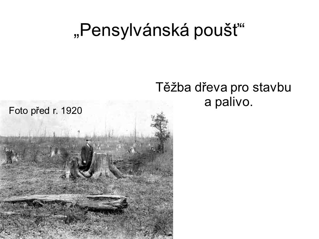 """""""Pensylvánská poušť"""" Těžba dřeva pro stavbu a palivo. Foto před r. 1920"""