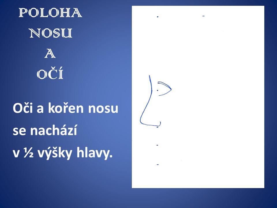 POLOHA NOSU A O Č Í Oči a kořen nosu se nachází v ½ výšky hlavy.