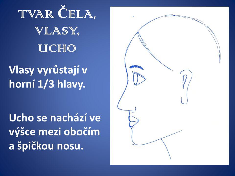 TVAR Č ELA, VLASY, UCHO Vlasy vyrůstají v horní 1/3 hlavy. Ucho se nachází ve výšce mezi obočím a špičkou nosu.