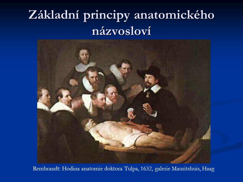 Základní principy anatomického názvosloví Rembrandt: Hodina anatomie doktora Tulpa, 1632, galerie Mauritshuis, Haag
