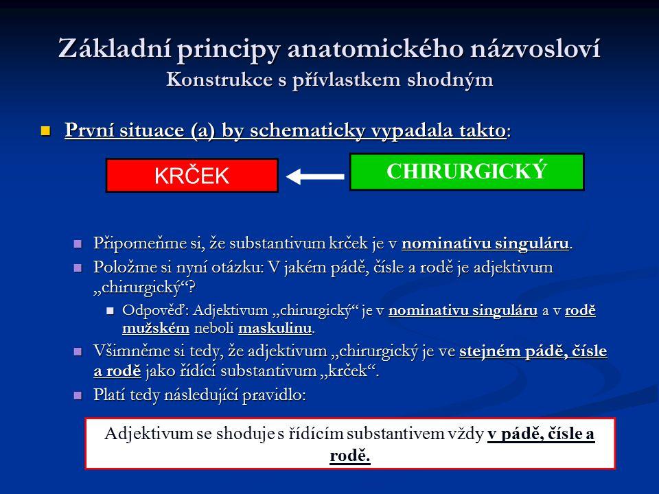 Základní principy anatomického názvosloví Konstrukce s přívlastkem shodným První situace (a) by schematicky vypadala takto: První situace (a) by schem