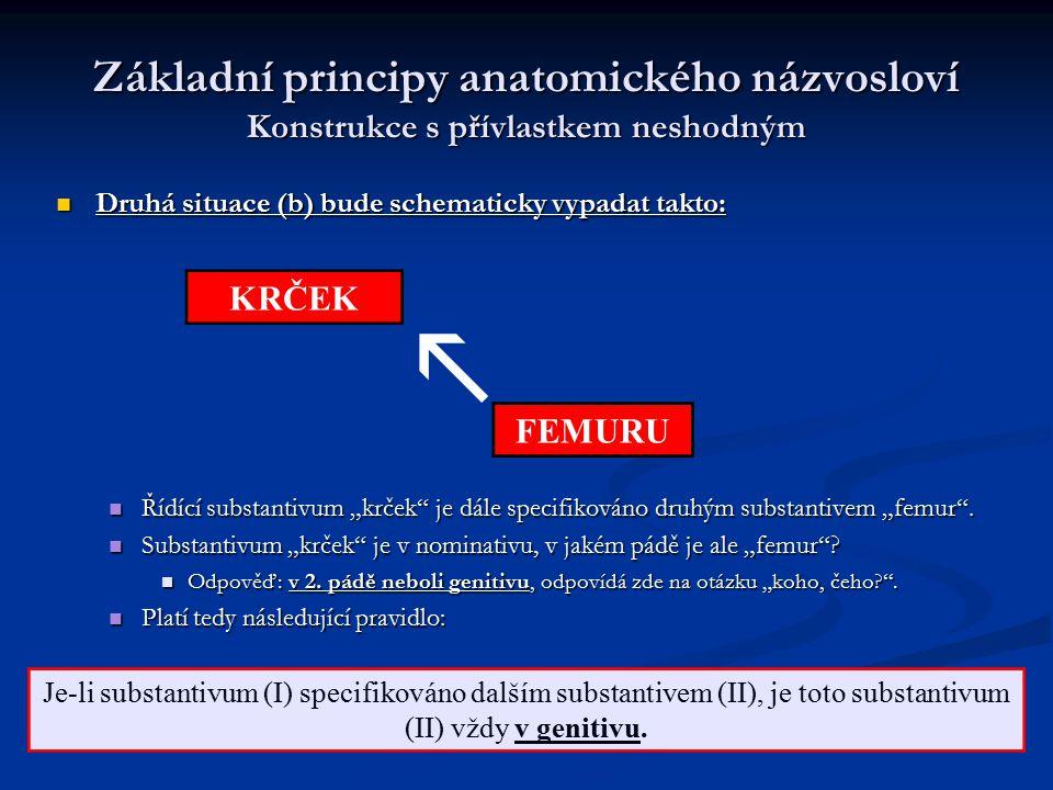 Základní principy anatomického názvosloví Konstrukce s přívlastkem neshodným Druhá situace (b) bude schematicky vypadat takto: Druhá situace (b) bude