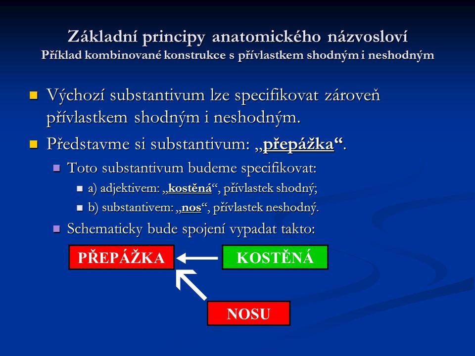 Základní principy anatomického názvosloví Příklad kombinované konstrukce s přívlastkem shodným i neshodným Výchozí substantivum lze specifikovat zárov