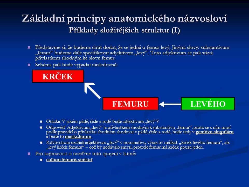 Základní principy anatomického názvosloví Příklady složitějších struktur (I) Představme si, že budeme chtít dodat, že se jedná o femur levý. Jinými sl