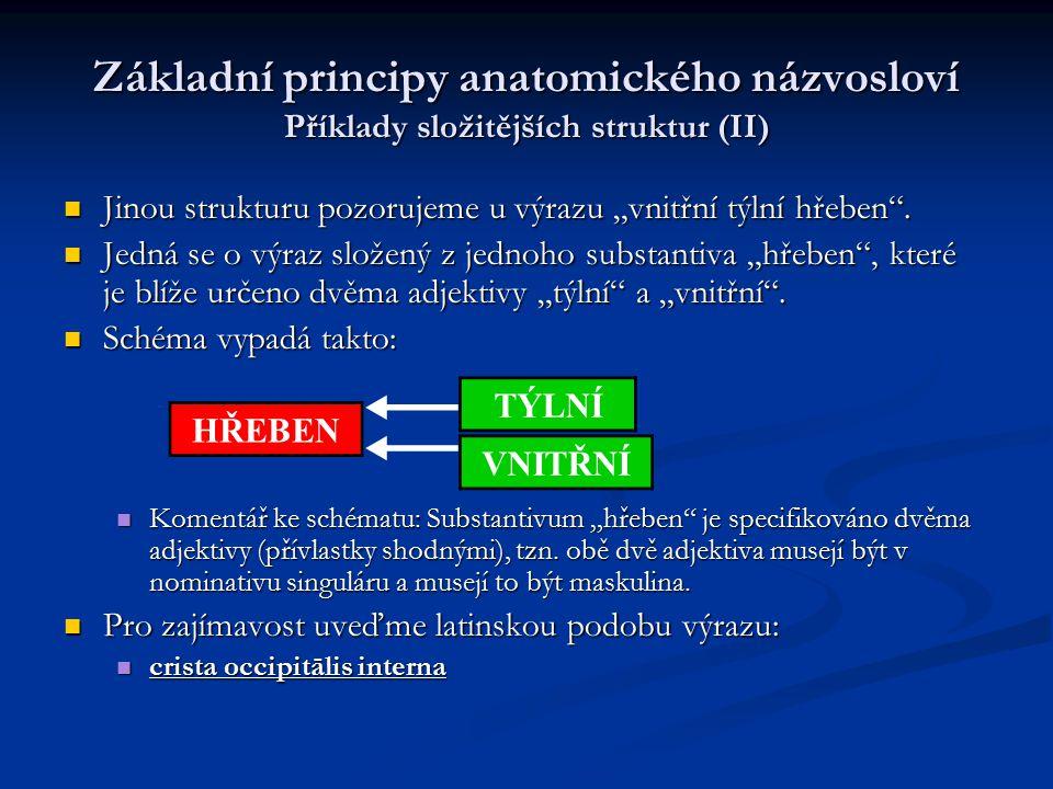 """Základní principy anatomického názvosloví Příklady složitějších struktur (II) Jinou strukturu pozorujeme u výrazu """"vnitřní týlní hřeben"""". Jinou strukt"""