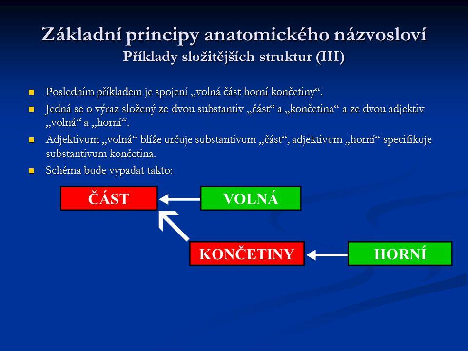"""Základní principy anatomického názvosloví Příklady složitějších struktur (III) Posledním příkladem je spojení """"volná část horní končetiny"""". Posledním"""