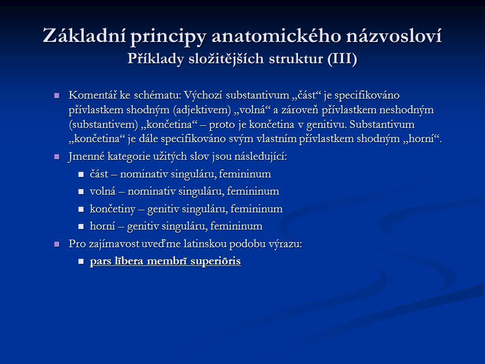 """Základní principy anatomického názvosloví Příklady složitějších struktur (III) Komentář ke schématu: Výchozí substantivum """"část"""" je specifikováno přív"""