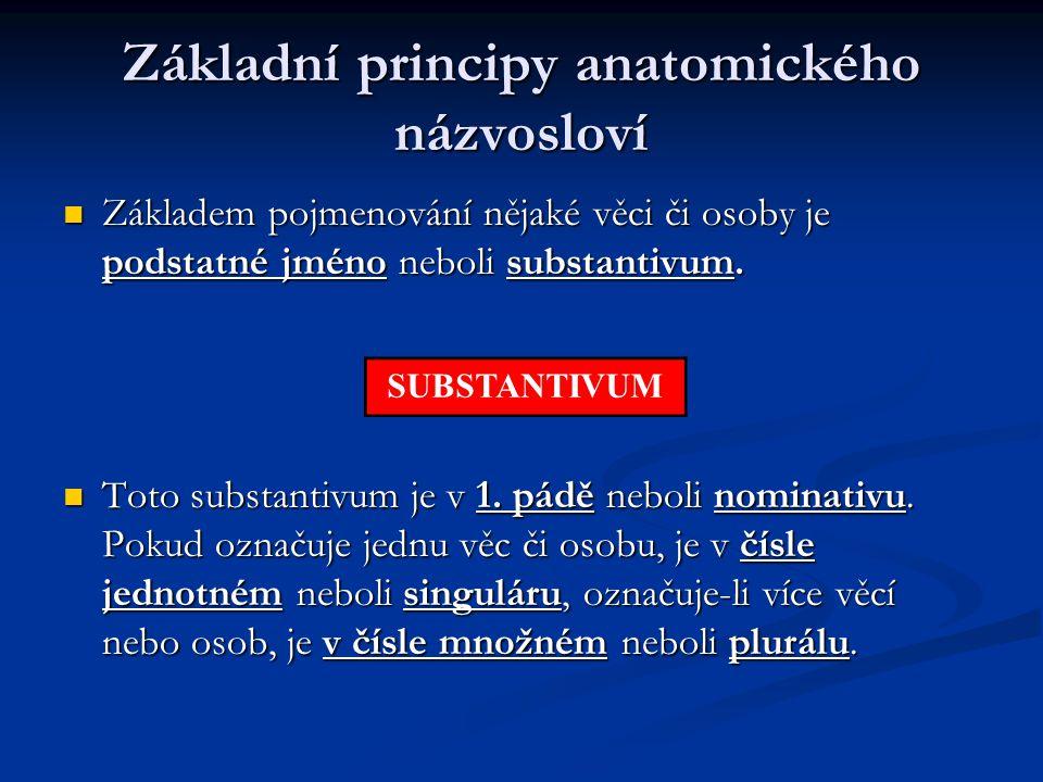 Základní principy anatomického názvosloví Základem pojmenování nějaké věci či osoby je podstatné jméno neboli substantivum. Základem pojmenování nějak