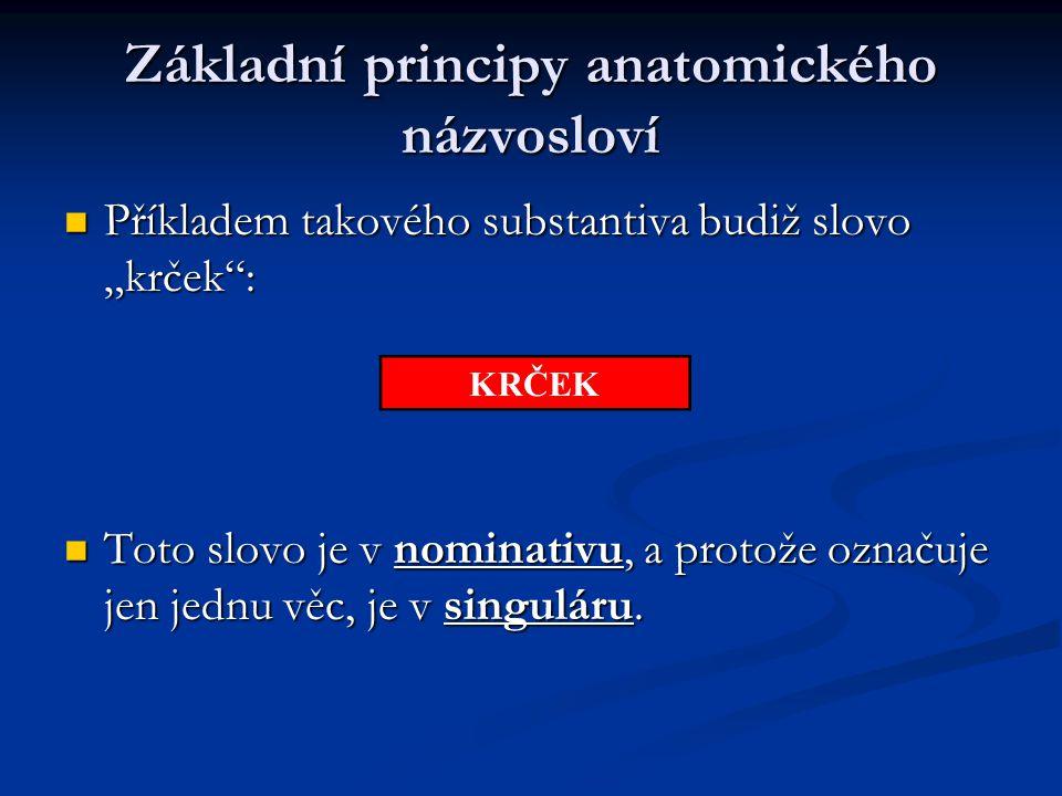"""Základní principy anatomického názvosloví Příkladem takového substantiva budiž slovo """"krček"""": Příkladem takového substantiva budiž slovo """"krček"""": Toto"""