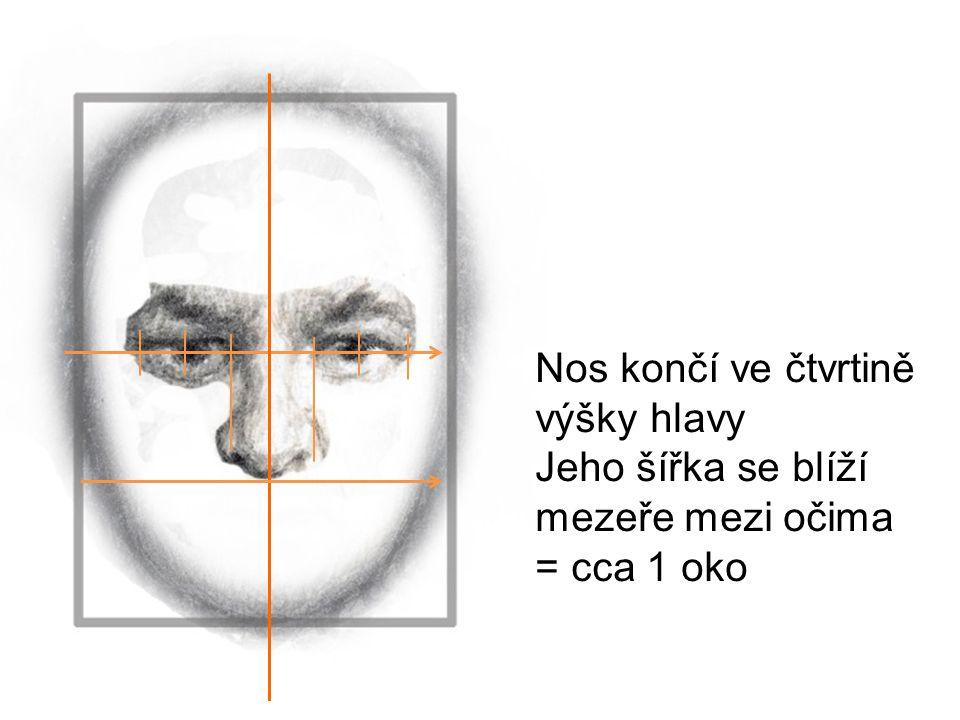 Nos končí ve čtvrtině výšky hlavy Jeho šířka se blíží mezeře mezi očima = cca 1 oko