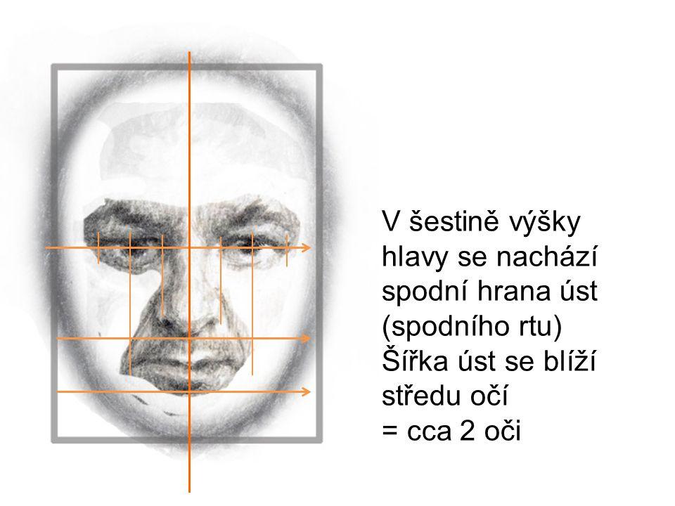 V šestině výšky hlavy se nachází spodní hrana úst (spodního rtu) Šířka úst se blíží středu očí = cca 2 oči