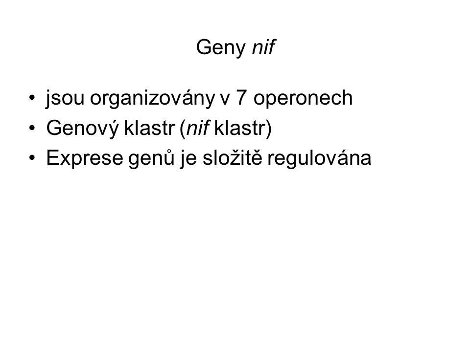 Geny nif jsou organizovány v 7 operonech Genový klastr (nif klastr) Exprese genů je složitě regulována