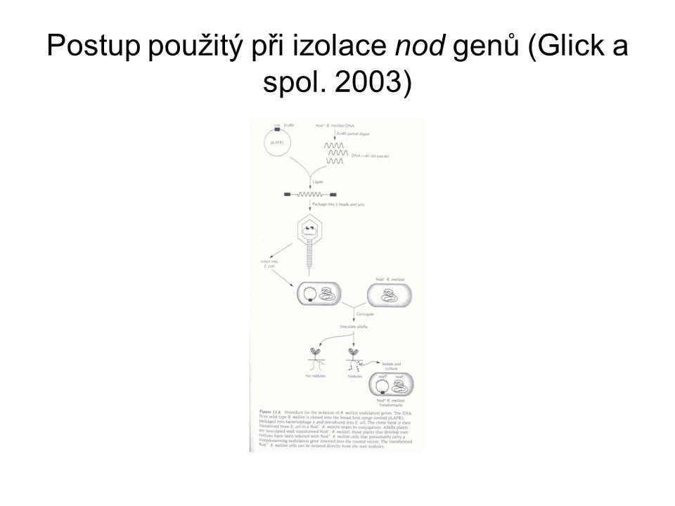 Postup použitý při izolace nod genů (Glick a spol. 2003)